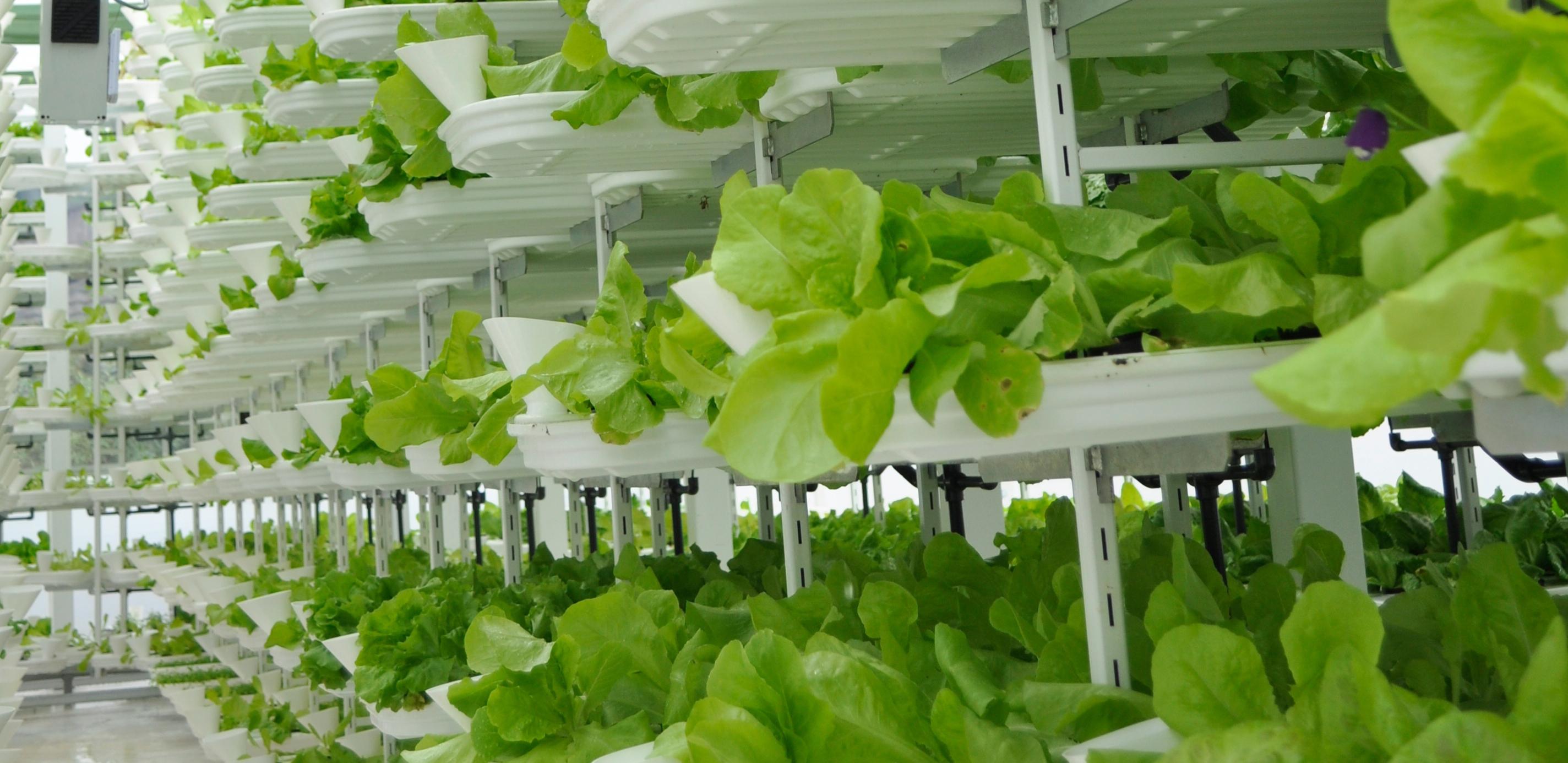 Vertical Plantation Farm Urban Attitudejpg