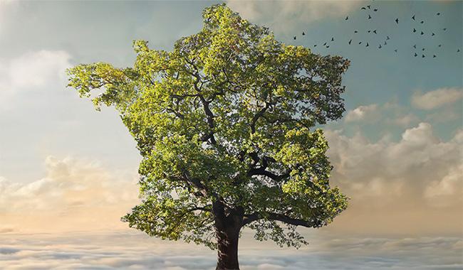 46442_palmares-ecologie