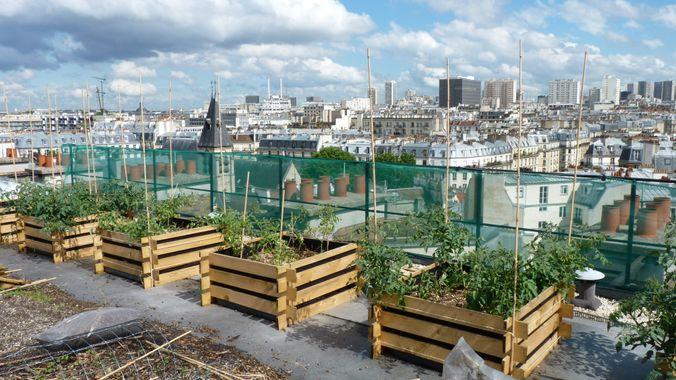 Panorama des jardins urbains les plus improbables